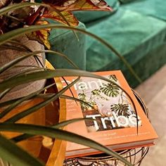 Plant Tribe Book (@planttribebook) • Instagram photos and videos Take Care Of Yourself, Urban, Photo And Video, Videos, Interior, Books, Plants, Fun, Photos