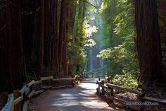 John Muir Woods - Walk in Paradise By Darvin Atkeson