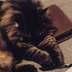 Wofür er nicht alles gut ist   #Katze #mietz #cat #maincoon #Nala #Filo #filofax #filofaxing #planneraddict #planner #plannernerd #maldenochre #Malden #ochre #A5 #Kalender #Deko #Dekoration #dekorieren #filofaxaddict #filofaxlove #filofaxdeutschland by filo_zelda