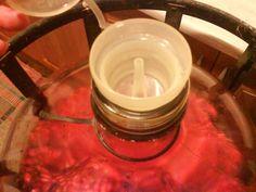 Šípkové víno (fotorecept) - obrázok 7 Ale, Tableware, Dinnerware, Ale Beer, Tablewares, Dishes, Place Settings, Ales, Beer
