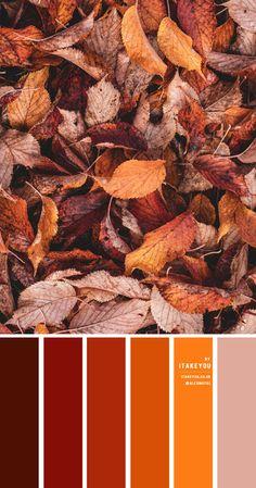 Orange Palette, Orange Color Palettes, Red Colour Palette, Burnt Orange Color, Rust Color Schemes, Color Schemes Colour Palettes, Orange Color Combinations, Color Swatches, Color Inspiration