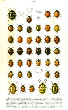 Inspiration AND lots of others on this site!  Animal - Insect - Ladybug - Educational plate (2)