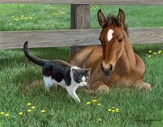 Foal & Cat Painting; Hi There by Persis Clayton Weirs | Wild Wings. Cute baby horse and kitten.