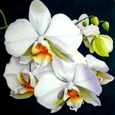 "Painting on Silk   ""Moth Orchid"" - mounted 42cm square    ©2009 Leonard Thompson"