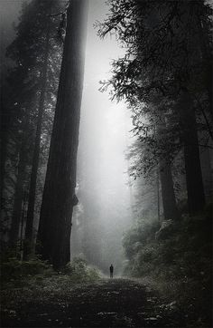 alone with trees.