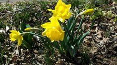 Hello spring, we've