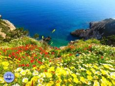 Holiday in Crete walking and excursions on Crete Greece Different Types Of Flowers, Different Plants, Types Of Plants, Walking Holiday, Winter Plants, Heraklion, Greece Holiday, Paradise On Earth, Greece Islands