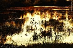 Rustic Color Palettes, Rustic Colors, Rembrandt, Fine Art Photography, Life Is Good, Wall Art, Landscape, Amazon, Abstract