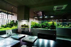 Nature Aquarium Gallery