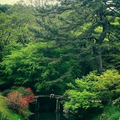 "This is Ritsurin Koen a Japanese ""strolling"" garden built by the local Daimyo (feudal lords) over a 100 years starting sometime in the 1620s. It's pretty amazing covering 75 hectares with 13 landscaped hills 6 large ponds and numerous stone arrangements. This picture only shows you a small corner of the garden but gives you a pretty good idea just how pretty it is. Makes me want to go back to Australia and start pushing boulders together to make small hills and planting maple trees…"