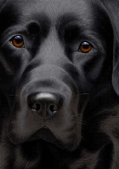 LABRADOR – Who can resist a lab puppy?! ❤ Artist Nigel Hemming