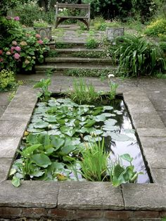 Small Formal Pond with Aquatic Planting Photographic Print