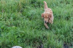 Tripp chasing something