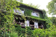 ecrin de verdure ivy covered loveliness