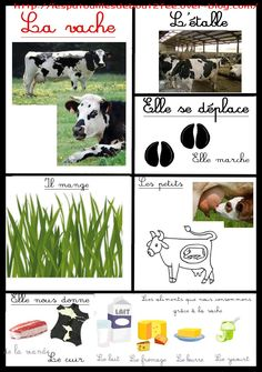 Mural: Hem après de la vaca... Preschool Learning Activities, Classroom Activities, Teaching Kids, Animals For Kids, Farm Animals, Animals And Pets, Science For Kids, Science And Nature, Pet Vet