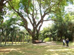 Inhotim: Repare no banco sob a árvore. Fiquei imaginando o tamanho do tronco usado para o fazer.