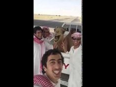 Camel Laughs With Men - Funny Video - Radass