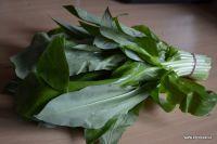 Pesto z medvědího česneku Parsley, Tofu, Pesto, Spinach, Plant Leaves, Spices, Herbs, Vegetables, Plants