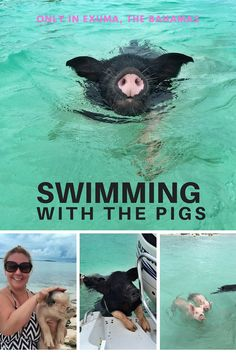 Swim with The Bahamas' famous swimming pigs! This would be so much fun with kids!