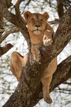 Serengeti National Park | trippy.com