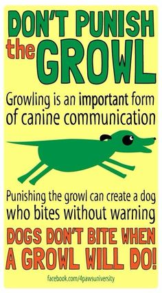 """lokithehusky: lifeoflaverne: I liked this photo that someone shared on my Facebook feed :) This is really important! A growl is a dog's way of saying, """"Please stop, you're making me uncomfortable."""" If you don't stop when the dog growls or actually punish the behavior, the dog will learn that growling doesn't help her, and so she must find another way to defend herself. Here's a good article on the subject: http://www.nj.com/pets/index.ssf/2015/05/how_to_handle_a_growling_dog.html"""