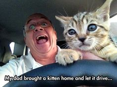 Kitty Wants To Drive Funny Animal Videos, Funny Animal Pictures, Funny Photos, Best Funny Pictures, Funny Animals, Cute Animals, Japanese Funny, Dad Humor, Dad Jokes