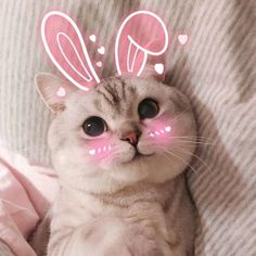 These cute kittens will make you happy. Cats are awesome creatures. Cute Baby Cats, Cute Little Animals, Cute Cats And Kittens, I Love Cats, Kittens Cutest, Siamese Kittens, Cute Cat Memes, Cute Love Memes, Funny Cats