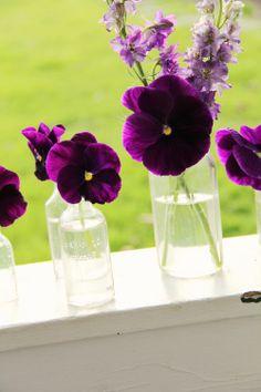 .purple pansies...always make me think of Mom-Mom