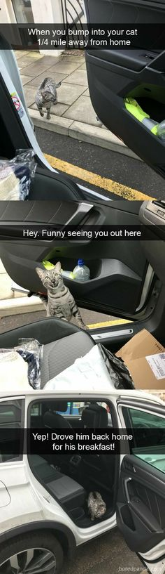 Funny Animal Pictures Of The Day funny memes,da. - So Funny Epic Fails Pictures Funny Animal Memes, Cute Funny Animals, Funny Cute, Cute Cats, Funny Humor, Cats Humor, Super Funny, Dog Memes, Hilarious Quotes