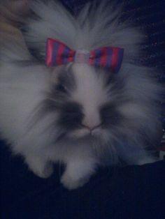 Lion head rabbit she's so cute