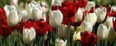 Deus é louvado por retirar do cativeiro o seu povo. (Salmo 126). : Texto: 1° O copeiro-mor, porém, não se lembrou de ...