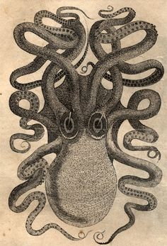 Octopus engraving from Old Harper's magazine