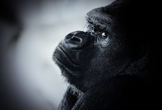 Animals must be free!! by Nicolas LB, via 500px