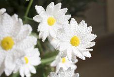 Hauskinta on uuden kukan aloitus, Anne Poropat sanoo.