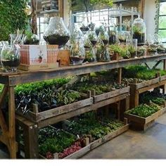 Garden Goals #greendreams #greenthumb #gardentherapy #backyardnursery #plants #gardening #collect #propagate #grow #plantaddict #foliage #terrarriums #succulents #dreambusiness #plantshop