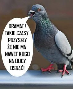 To jsou časy, nemám na ulici ani koho posrat! Life Humor, Man Humor, Memes Humor, Wtf Funny, Funny Texts, Polish Memes, Happy Birthday Video, Weekend Humor, Animal Jokes