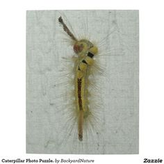 Caterpillar Photo Puzzle. Jigsaw Puzzles