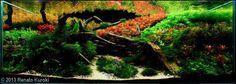 Renato-ku.jpg 836×298 pixels