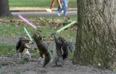 jedi squirrels gif | jedi_squirrel.jpg