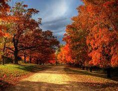 autumn leaves - Pesquisa Google