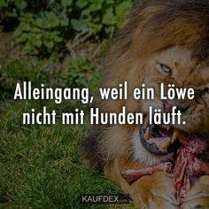 Alleingang, weil ein Löwe nicht mit Hunden läuft. Citation Rap, Cool Slogans, Kurdistan, German Language, Motivation, Lions, Vikings, Mindset, Harry Potter