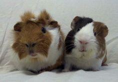 Cinnamon and Clover