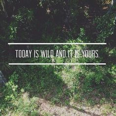 Love nature Quote Today is wild and it is yours  Beauty of nature, green forest