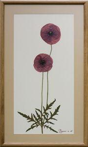 Greefix Картины-гербарии для современного интерьера