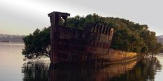 This century-old abandoned ship now hosts a floating forest