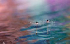 WeeklyDesignNews(N.6)「綿毛と水の美しいフォトアート」他