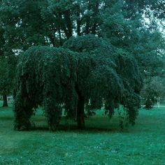 #tree #park #green #nature #love #trip