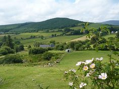 County Wicklow, Ireland... to get back in touch with the Byrne family roots.
