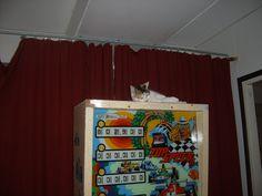 Bastet on the backbox