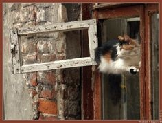 Cat Window, Cat Love, Ramen, Dog Cat, Cute Animals, Creatures, Kitty, Windows, Dogs
